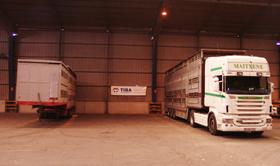 transporte-de-ganado